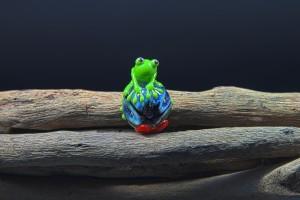 frosch_0059_01